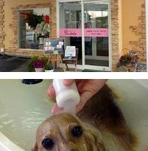 愛犬の店 プ・ドール