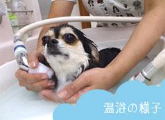 ペットのお風呂屋さん WONWON加賀店(ワンワン)