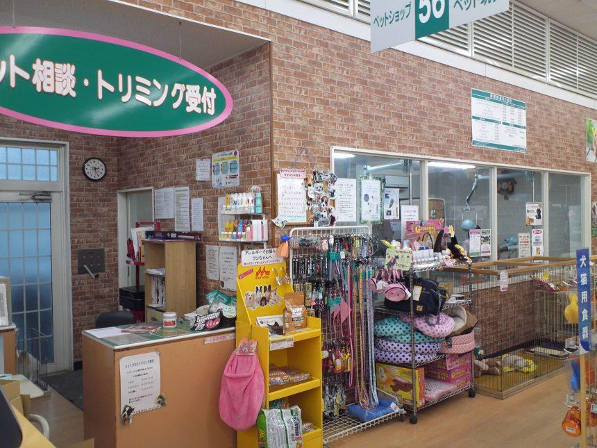 ペットかわた ダイキナーサリー 朝生田店